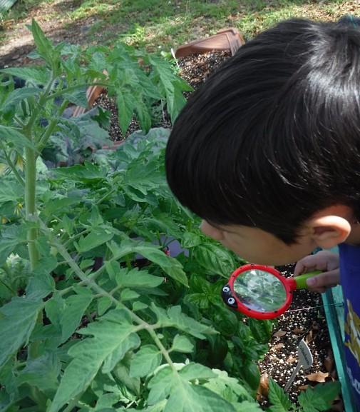 Niño observa una planta en el huerto detenidamente