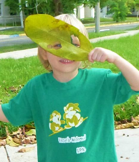 Niño juega con la hoja de un árbol
