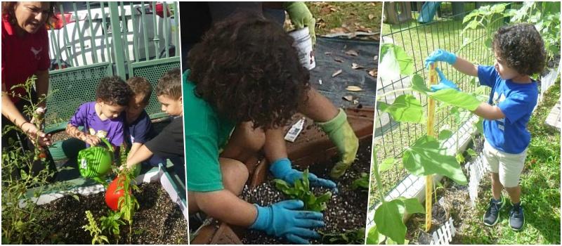 Tres fotos que muestran a varios niños trabajando en el huerto escolar